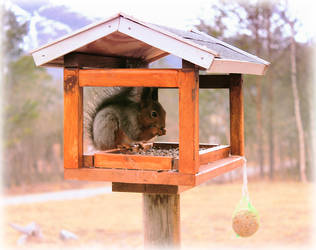 Squirrel in the birdhouse by Jaqalynn
