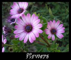 Flowers by Lauralanthalasa