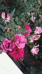 Some Flowers by HeyouPikachu123
