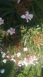 Beautiful with flowers by HeyouPikachu123