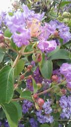 Pretty Purple Flowers by HeyouPikachu123