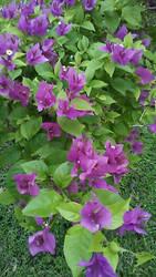 Beautifully Coloured Flowers by HeyouPikachu123