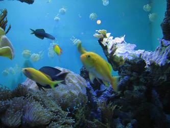 Aquarium Fish 06 by LithiumStock