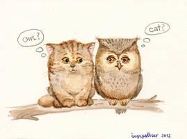 owls by ingapaltser