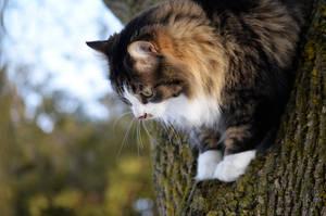 But I'm Afraid to Jump! by GarfieldP