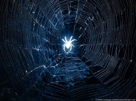 Spider by Someone144
