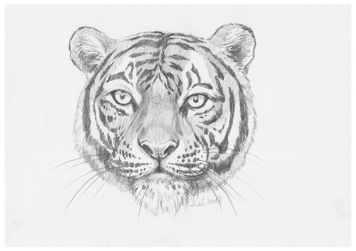 Tiger by szalstudio