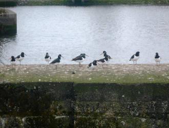 Weir birds by Keresaspa