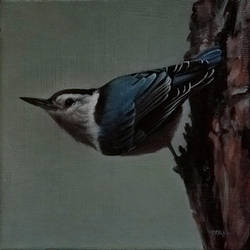 Bird 10 by trulsespedal