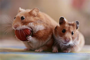 Strawberry by StacyD
