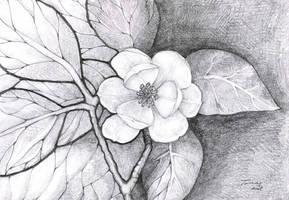 floare by lovelycristina