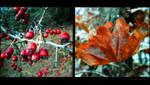 My autumn II by Juliana-Mierzejewska