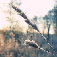 Cold morning XIX by Juliana-Mierzejewska