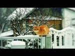 Winter cat by Juliana-Mierzejewska