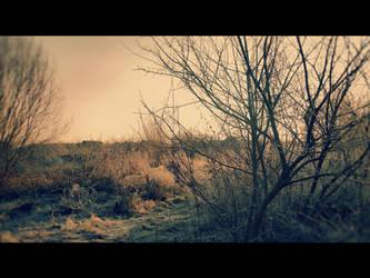 Cold morning XXVI by Juliana-Mierzejewska