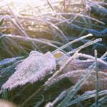 Cold morning XXXIII by Juliana-Mierzejewska