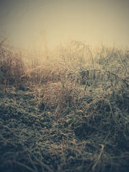 Cold morning XXXVI by Juliana-Mierzejewska