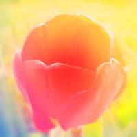 Spring V by Juliana-Mierzejewska