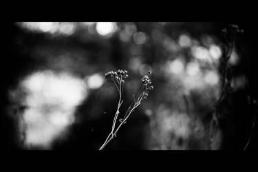 Autumn IV by Juliana-Mierzejewska