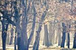 Trees by Juliana-Mierzejewska
