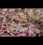 My autumn III by Juliana-Mierzejewska