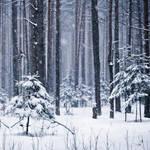 My winter VII by Juliana-Mierzejewska