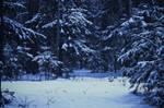 My winter XI by Juliana-Mierzejewska