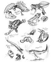 Animal Studies - Sea Animal by Gingco