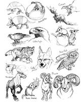 Animal Studies by Gingco
