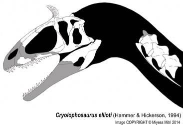 Cryolophosaurus skull by Miyess