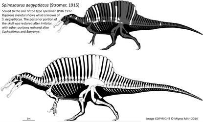 Spinosaurus Revised by Miyess