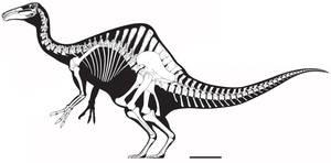 Deinocheirus mirificus Skeletal by Miyess