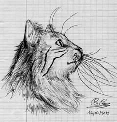 Cat ^w^ by SalamiCC