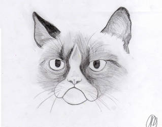 Tard the Grumpy Cat by lalliman
