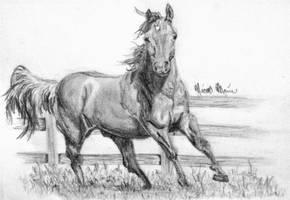 Horse by NicoleRylie