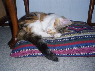 sleeping kitten by dreamwalker6677