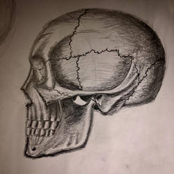 Skull Drawing by TanBekdemir