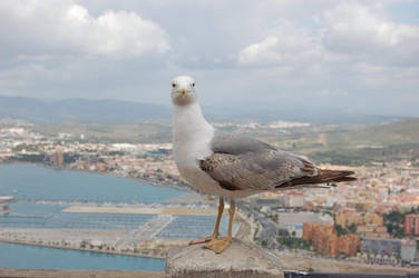 Gibraltar by Chairudo