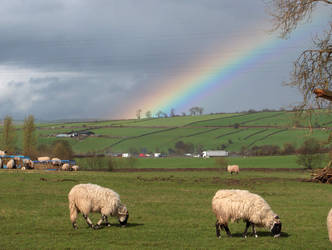 Sheep and Rainbow by Chairudo