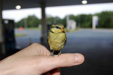 Birdie by Chairudo