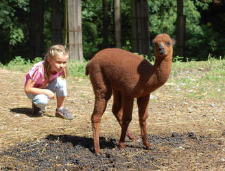 LLama and a little girl by Chairudo