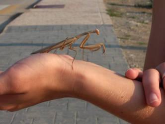 Praying Mantis by Chairudo