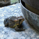 .toad-ily thinks he's hiding. by Foozma73
