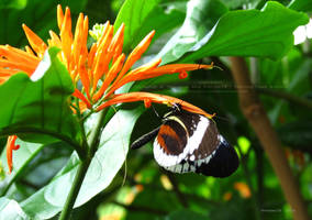 2014 Butterflies 7 by Foozma73