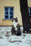 Cat by ShadowPhotography