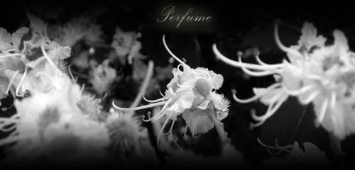perfume by soulisland