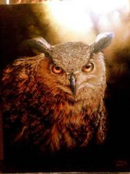 Owl by Dan-Harding