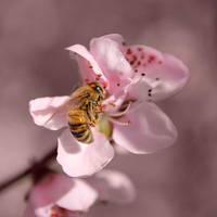 Bee by Francy-93