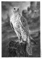 Falcon by hartr