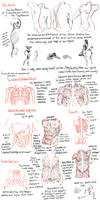 anatomy pt3 by lyseba